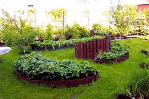 газоны и клумбы фото